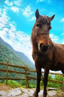 Cavalo vermelho na fazenda cercada pela floresta