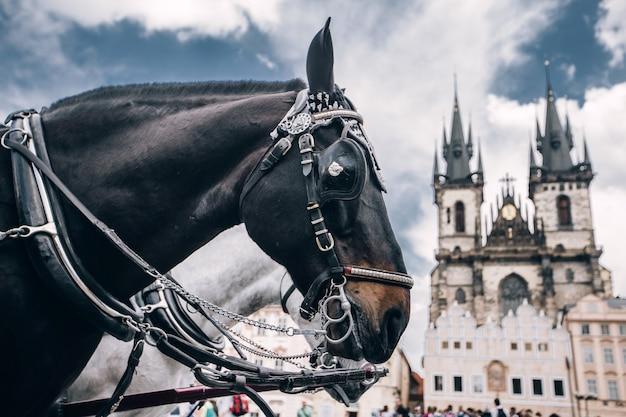 Cavalos brancos e pretos na praça da cidade velha de praga