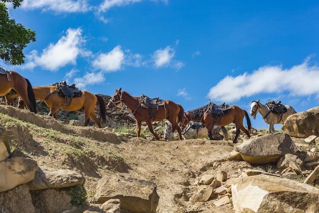 Cavalos carregam carga nas montanhas