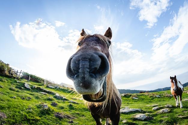 Cavalos com rostos engraçados e curiosos em liberdade na montanha