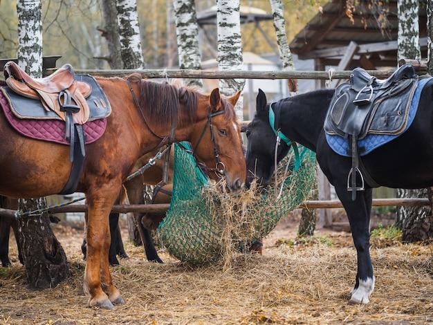 Cavalos comem feno de um alimentador de malha