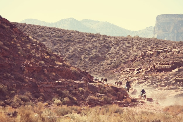 Cavalos correndo nas montanhas