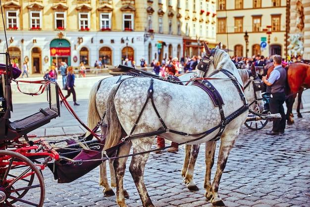 Cavalos de carruagem andando nas ruas de uma das mais belas cidades europeias - viena