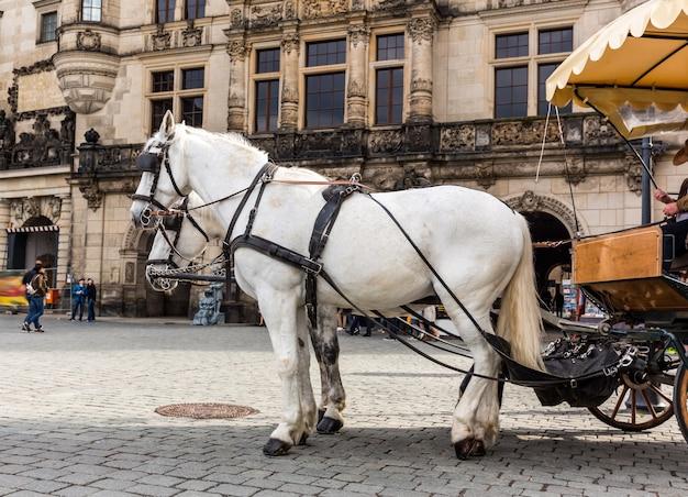 Cavalos de excursão rostos no velho reboque europeu