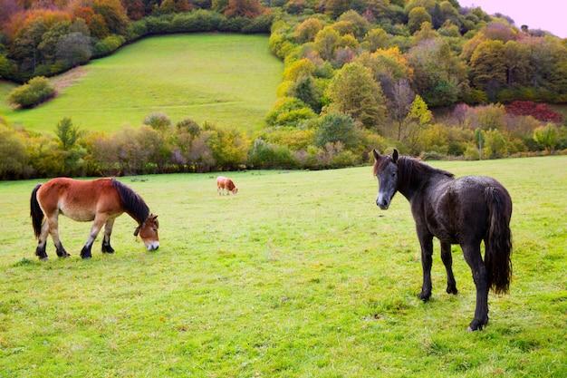 Cavalos e vacas pastando em prados dos pirenéus, na espanha