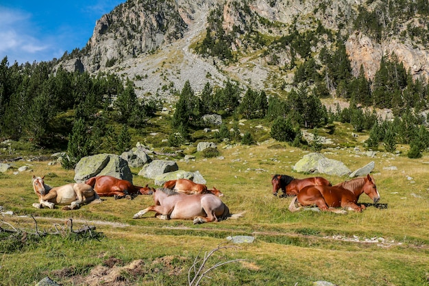 Cavalos em liberdade, parque nacional de aigãƒâ'ã¼estortes e estany de sant maurici.