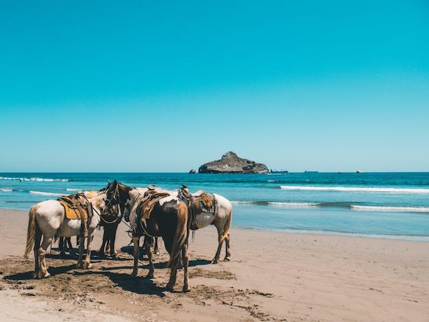 Cavalos em pé na praia ao lado do mar azul claro e uma montanha