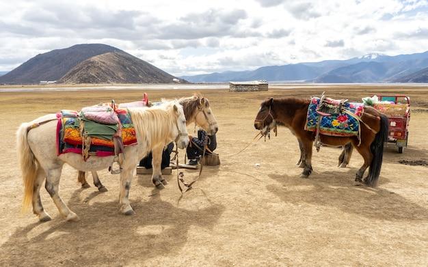 Cavalos em shangri-la. o cenário mais bonito não pode ser admirado sem cavalos.