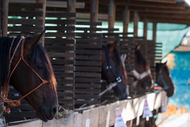 Cavalos em um estábulo