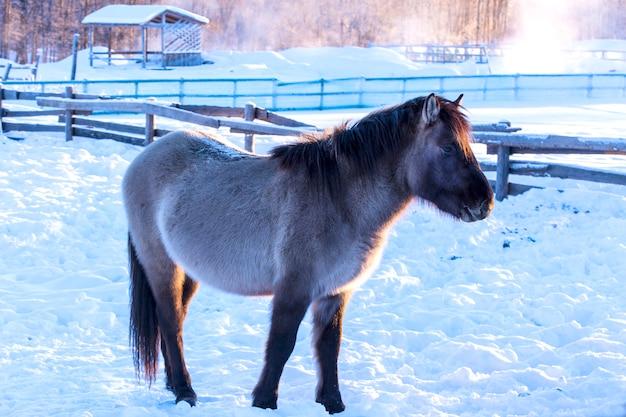 Cavalos em uma fazenda na noite de inverno gelado