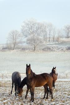 Cavalos em uma paisagem de inverno