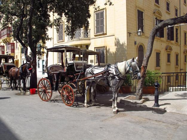 Cavalos em valletta, malta