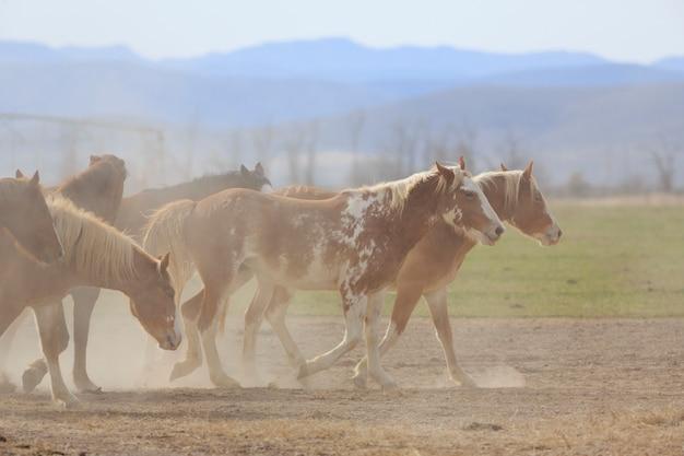 Cavalos empoeirados no rancho