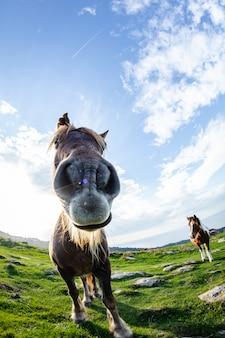 Cavalos engraçados selvagens na montanha verde