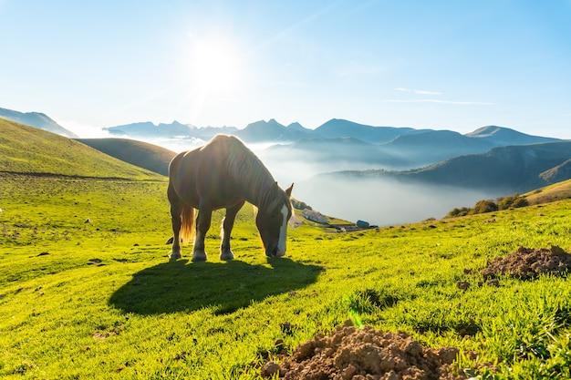 Cavalos livres ao nascer do sol no topo do monte larrau, um mar de nozes ao fundo. na floresta ou selva de irati, pirineus atlânticos da frança