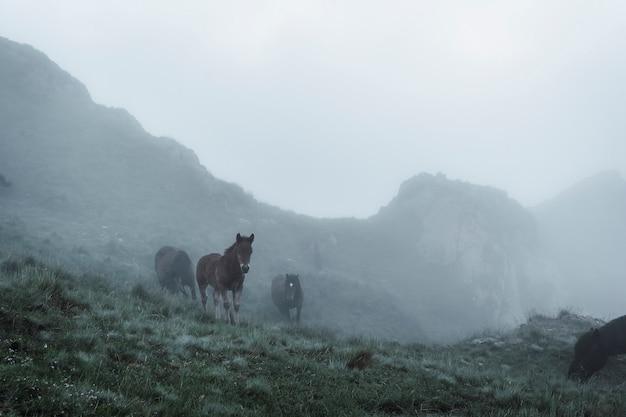 Cavalos livres no topo das peñas de aya