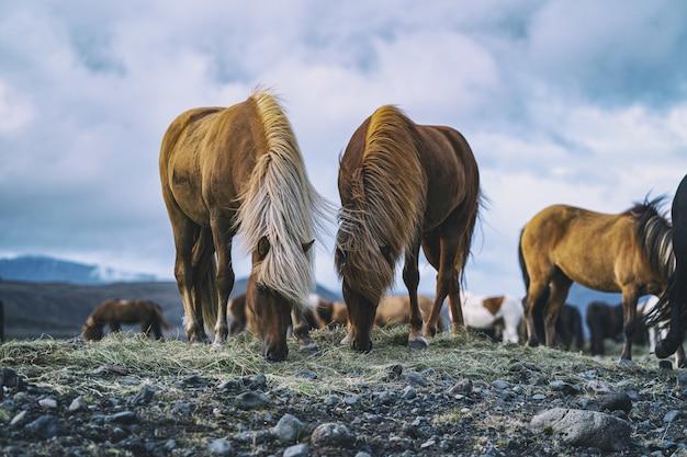 Cavalos marrons durante o dia