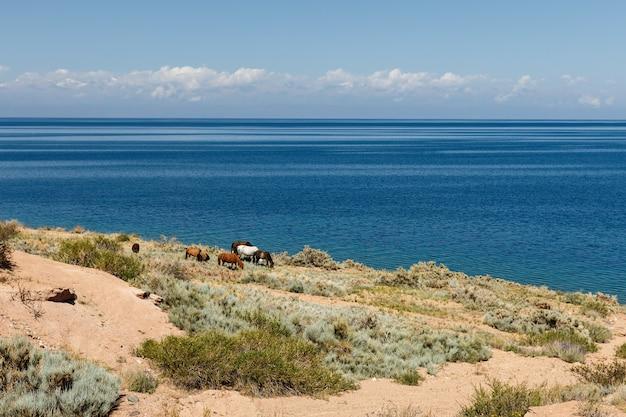 Cavalos na margem do lago issyk-kul no quirguistão