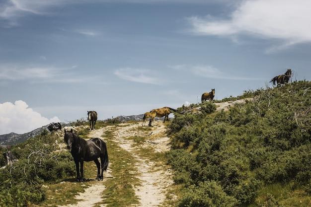 Cavalos na montanha cercados por árvores