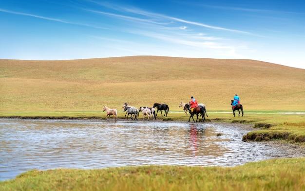 Cavalos na pradaria