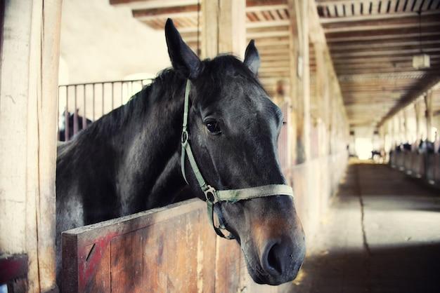 Cavalos nas baias, barulho alto, efeito vintage