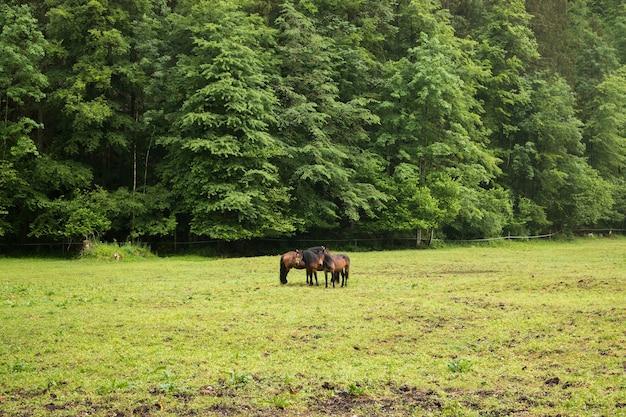 Cavalos nas montanhas alpinas, longe da floresta verde. caminhe em um dia de verão na cidade de hallstatt, áustria