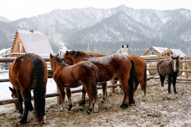 Cavalos no estábulo