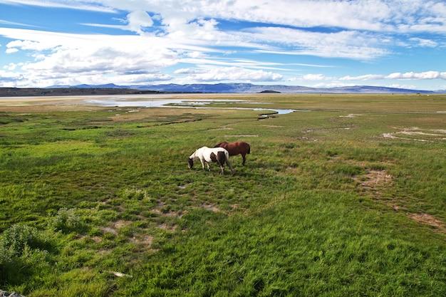 Cavalos no lago argentino em el calafate
