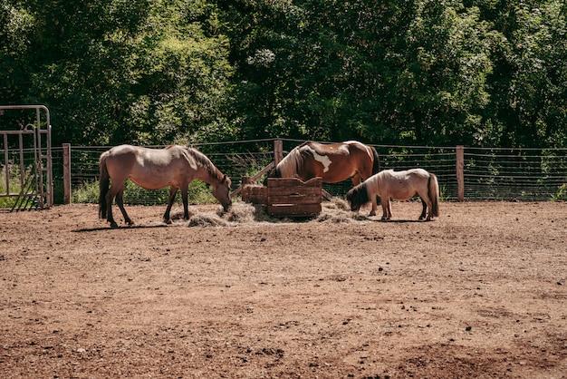 Cavalos no parque animal escher dã © ierpark em esch sur alzette
