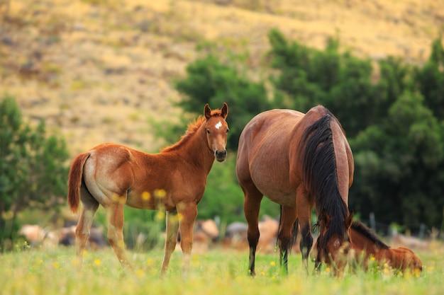 Cavalos no pasto de primavera