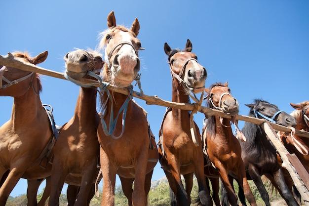 Cavalos no rancho