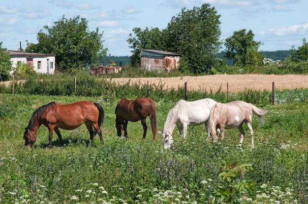 Cavalos pastando em uma bela pastagem verde em uma fazenda.