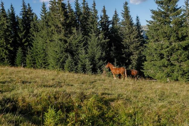 Cavalos pastando em uma montanha