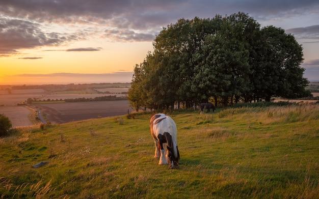 Cavalos pastando em uma paisagem rural sob a luz do sol quente, com cores azuis amarelas e laranja, pastando nas árvores e vista estendida