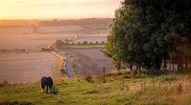 Cavalos pastando em uma paisagem rural sob sol quente com cores azul, amarelo e laranja, pastando em árvores com grama e vista ampla