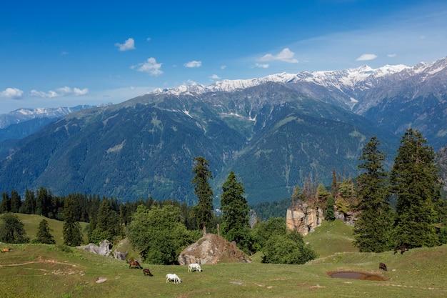 Cavalos pastando nas montanhas do himalaia