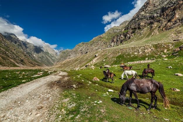 Cavalos pastando no himalaia