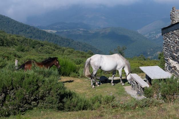 Cavalos perto da casa de um pastor nas montanhas, paisagem montanhosa