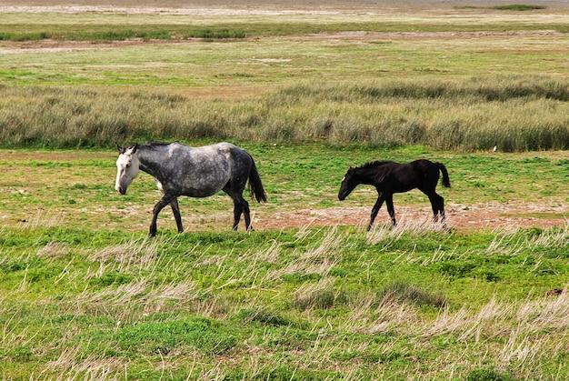 Cavalos perto do lago argentino em el calafate patagônia argentina