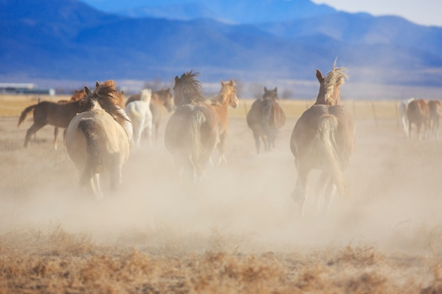 Cavalos selvagens correndo