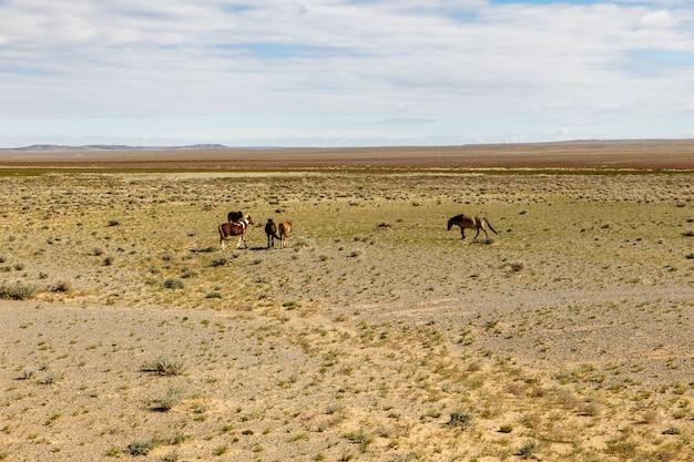 Cavalos selvagens pastam no deserto de gobi, mongólia