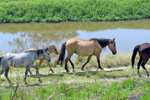 Cavalos trotando às margens do rio azul
