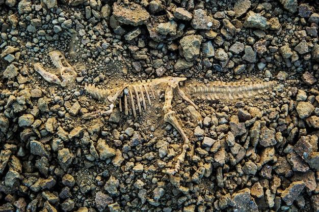 Cavar ossos fósseis t-rex dinossauro