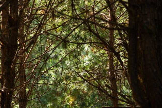 Caverna, árvore, em, floresta