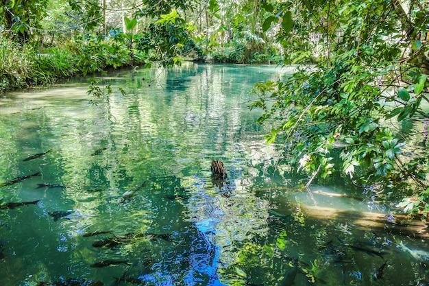 Caverna de peixes de tham pla, filho de mae hong, tailândia