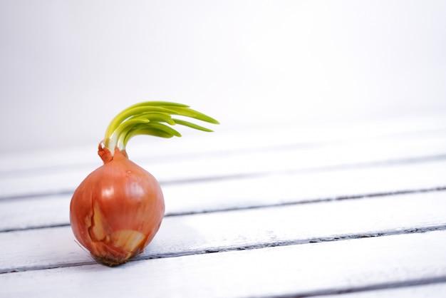 Cebola de laranja brotada e não plantada no solo, closeup em madeira backround