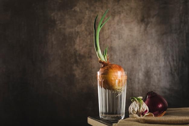 Cebola germinada cultivada em um copo d'água em casa com fatias de cebola roxa e alho germinado em uma mesa de madeira escura com um espaço de cópia para o texto. alimentos crus, produtos ecológicos.