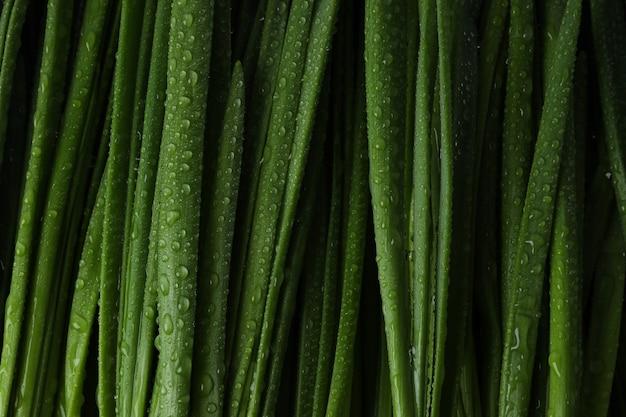 Cebola verde fresca com gotas de água