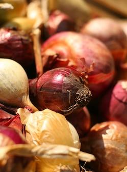 Cebolas frescas bulbo vermelho e amarelo