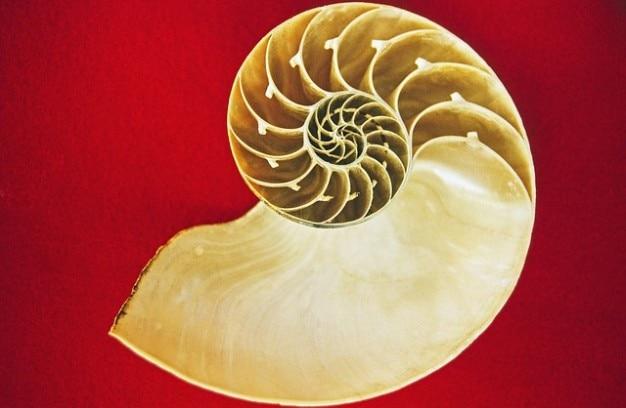 Cefalópodes férias memória mar habitação nautilus